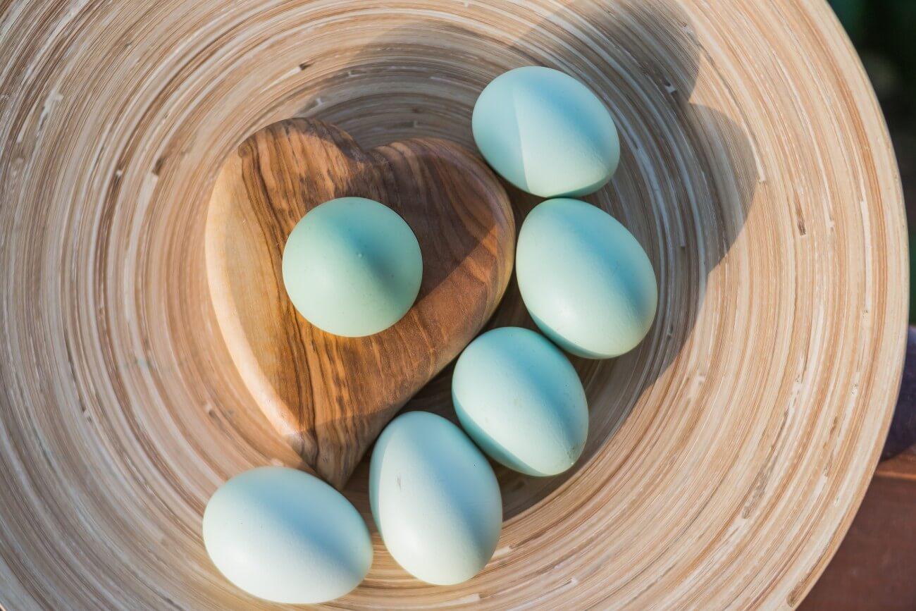 Huevos azules gallina araucana